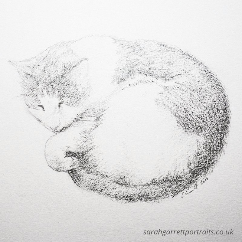 pencil drawing of a sleeping cat